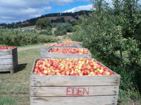 Eden Orchard And Farmstay - Dalby Accommodation