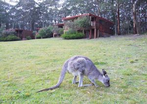 Jenolan Caves Cottages - Dalby Accommodation