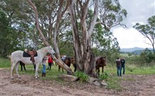 Hidden Valley Farm - Dalby Accommodation