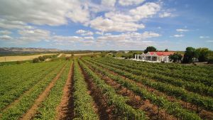1837 Barossa Luxury Vineyard Cottages - Dalby Accommodation